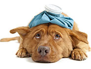 is-pet-health-insurance-worth-it-185.jpg