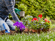 Low-maintenance-plants-for-your-home-garden_listing