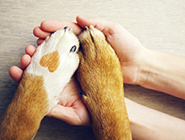 Protect_your_furry_friend_with_pet_insurance_listing-1